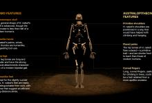 New Human Ancestor Elicits Awe - and Many Questions