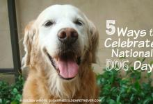5 Ways to Celebrate National Dog Day